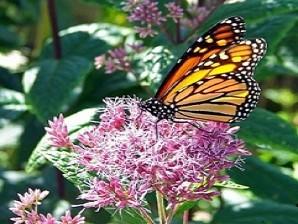 papillon christelle Site 2